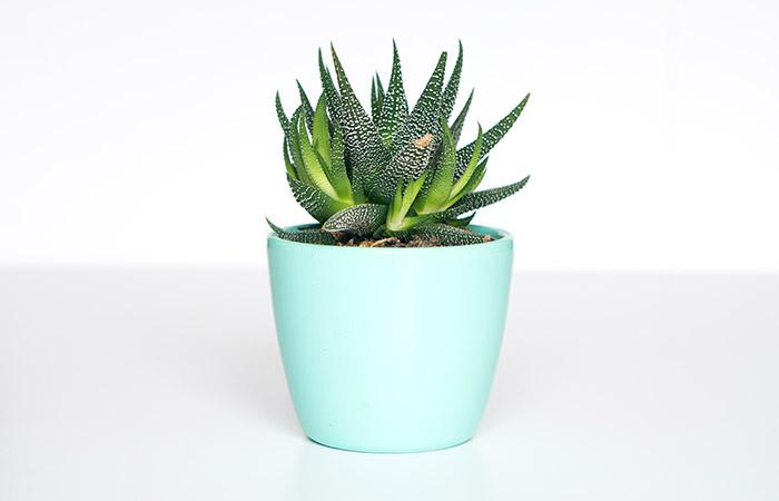 人気の植物図鑑無料アプリ
