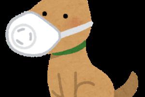 犬・猫等のペットをコロナウィルス感染から守る方法